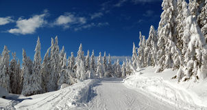 Winter landscape with snow in mountains, Slovakia Royalty Free Stock Images