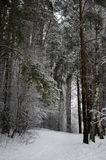 Winter landscape. Snow overcast day in the forest royalty free stock photos