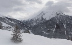 Winter landscape with snow and pine tree. Winter view Alps with pine tree in foreground and  fresh snow Stock Images