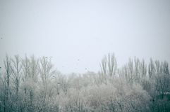 Winter landscape - snow storm, snow covered trees and black bird. Winter urban landscape - snow storm, snow covered trees and black birds royalty free stock photos