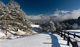Winter landscape with snow, tree and mountain Royalty Free Stock Photos