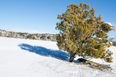 Winter landscape, snow on tree. Royalty Free Stock Photos