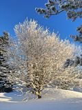 Winter landscape and snow tree Stock Images