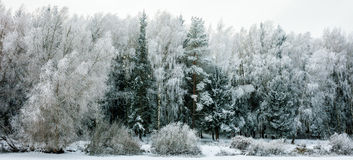 Winter Landscape with Snow and Trees. Peaceful winter landscape snow forest Royalty Free Stock Photography