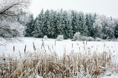Winter Landscape with Snow and Trees. Peaceful winter landscape snow forest Stock Images