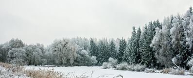 Winter Landscape with Snow and Trees. Peaceful winter landscape snow forest Royalty Free Stock Image