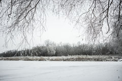 Winter Landscape with Snow and Trees. Peaceful winter landscape snow in the woods Stock Photo