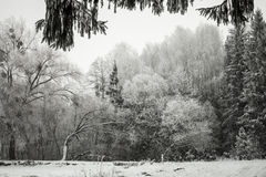 Winter Landscape with Snow and Trees. Peaceful winter landscape snow in the woods Stock Images
