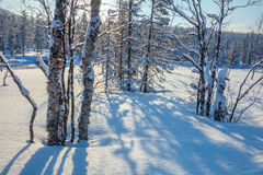 Winter Landscape with snow, trees and shadows Stock Photo