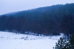 Winter landscape with snow and trees royalty free stock photo