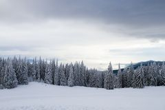 Winter landscape with snow and trees royalty free stock image
