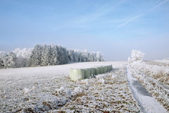 Winter landscape and snow wrapped trees in Sumava, Czech republi Stock Images