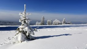 Winter landscape and snow wrapped trees Stock Photos