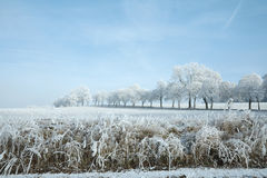Winter landscape and snow wrapped trees in Sumava, Czech republic, Royalty Free Stock Photography