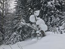 Landscape of snowy winter forest stock photo