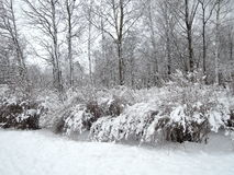 Winter landscape after snowfall royalty free stock photo