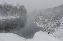 Snowstorm in the forest on the river bank Royalty Free Stock Image