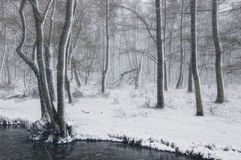 Winter landscape with snowfalls in the forest near the river Stock Image