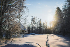 Winter landscape. Snowfield with a forest and house in the distance Royalty Free Stock Image