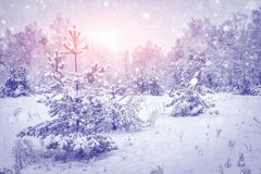 Winter landscape. Snowflakes in snowy winter forest at vivid sunrise. Magic Christmas trees on bright sun light Stock Image