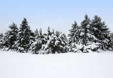 Winter landscape after the snowstorm royalty free stock photo