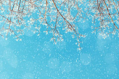 Winter landscape - snowy branches of the winter tree on the background of the sunny sky under snowfall. Winter nature background with free space for text Stock Photo