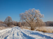 Winter landscape Stock Images