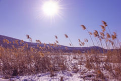 Winter landscape. Snowy field and blue sky with sun Stock Images
