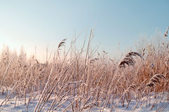 Winter landscape with snowy field Stock Photo