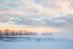 The winter landscape of snowy field or wasteland with the trees hiden by the mist or fog in the rays of sunrise royalty free stock photography