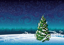 Winter landscape and snowy fir. Stock Images