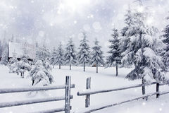 Winter landscape with snowy fir trees ad fence