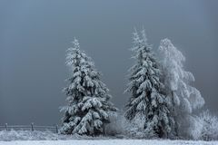 Winter landscape with snowy fir trees and forest. Christmas royalty free stock photography