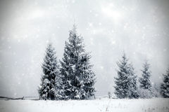 Winter landscape with snowy fir trees Royalty Free Stock Photography
