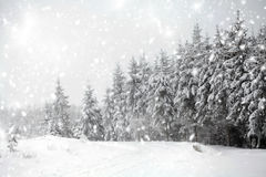 Winter landscape with snowy fir trees Stock Photo