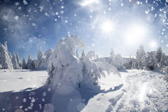 Winter landscape with snowy fir trees Royalty Free Stock Images