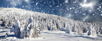 Winter landscape with snowy fir trees Stock Photos
