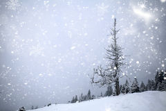 Winter landscape with snowy fir trees Royalty Free Stock Photos