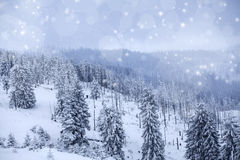 Winter landscape with snowy fir trees Royalty Free Stock Photo