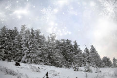 Winter landscape with snowy fir trees Stock Images