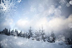 Winter landscape with snowy fir trees Stock Image