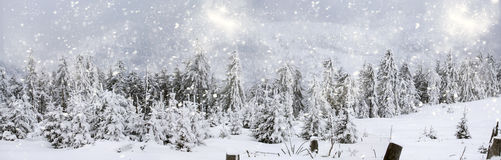 Winter landscape with snowy fir trees Stock Photography