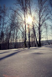 Winter landscape, snowy forest Stock Images