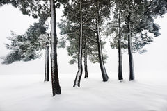 Winter landscape with snowy forest Royalty Free Stock Image