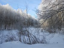 Snowy pond in the forest in the winter time. Stock Photo