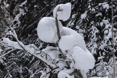 Winter landscape of snowy forest stock photos