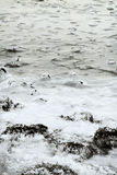 Winter Landscape 8. Snowy winter in Iceland by the ocean Stock Photography