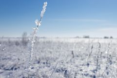 Winter landscape. Snowy meadow with plants Stock Photos