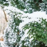 Winter landscape. Snowy nature. Snow-covered forest. Christmas weather. Snow snow royalty free stock photos