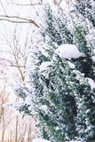 Winter landscape. Snowy nature. Snow-covered forest. Christmas weather. Snow snow stock photography
